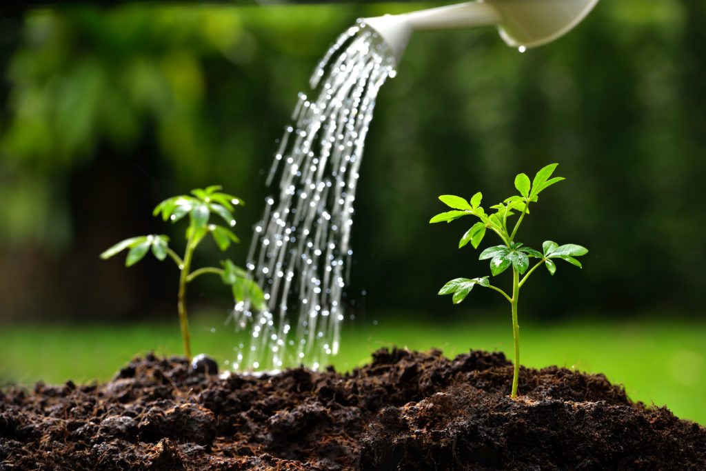 watering your plant with ro water